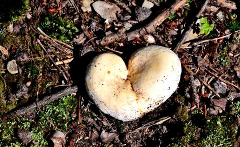 mushroom matter newsletter